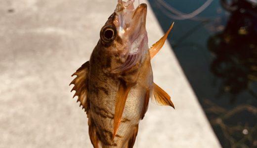 【県魚連裏】瀬戸大橋付近の下津井エリア。サビキでメバル、ワームでカサゴ