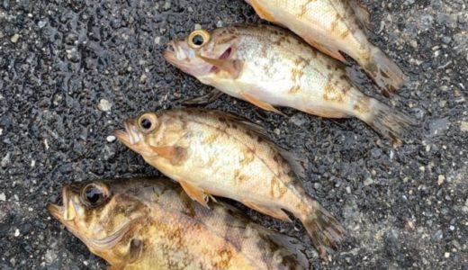釣りの初心者やファミリーは、とりあえずサビキ釣りで成功体験を。