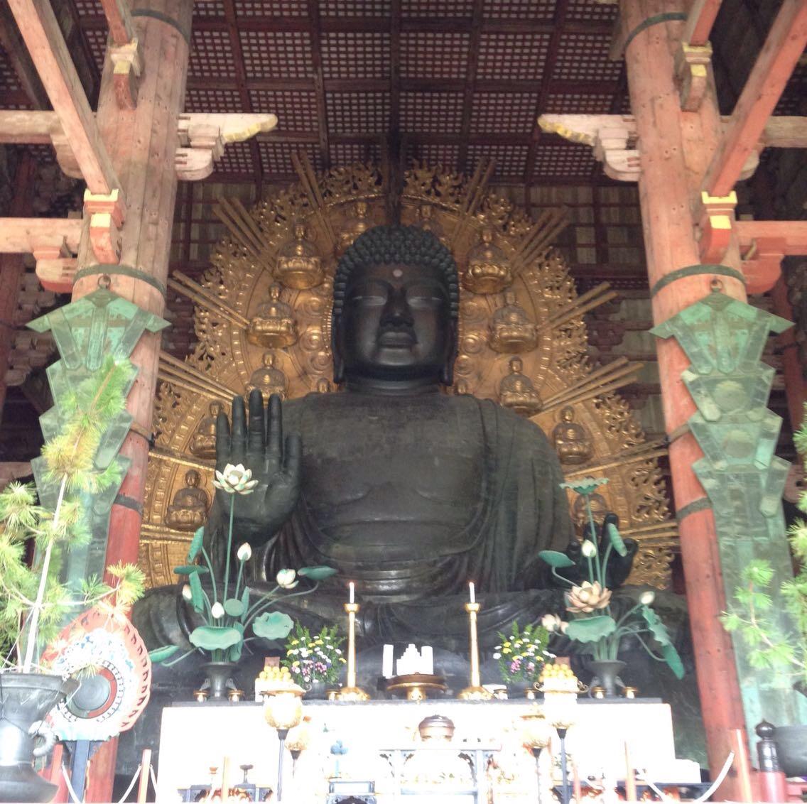 奈良といえば、鹿と大仏!観光の定番ですが子供達も大喜びでオススメ