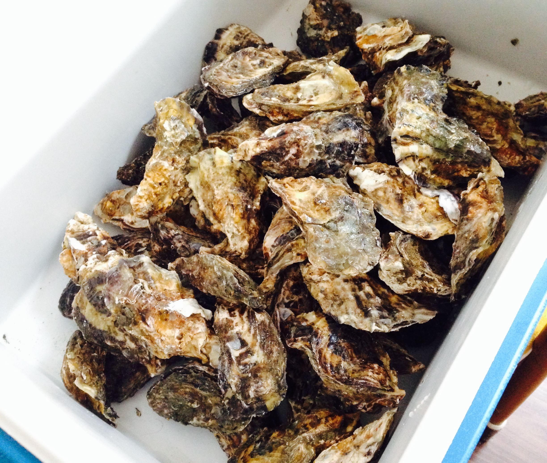 笠岡ベイファームの牡蠣祭り!カキ詰め放題もあり!日生カキ祭りに比べて穴場!